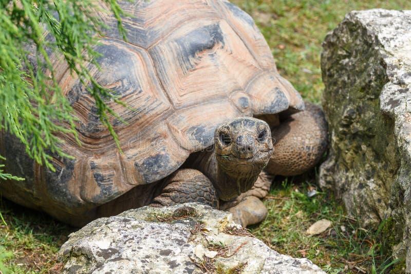 Ein Sonnenbad nehmende Schildkröte lizenzfreie stockfotos