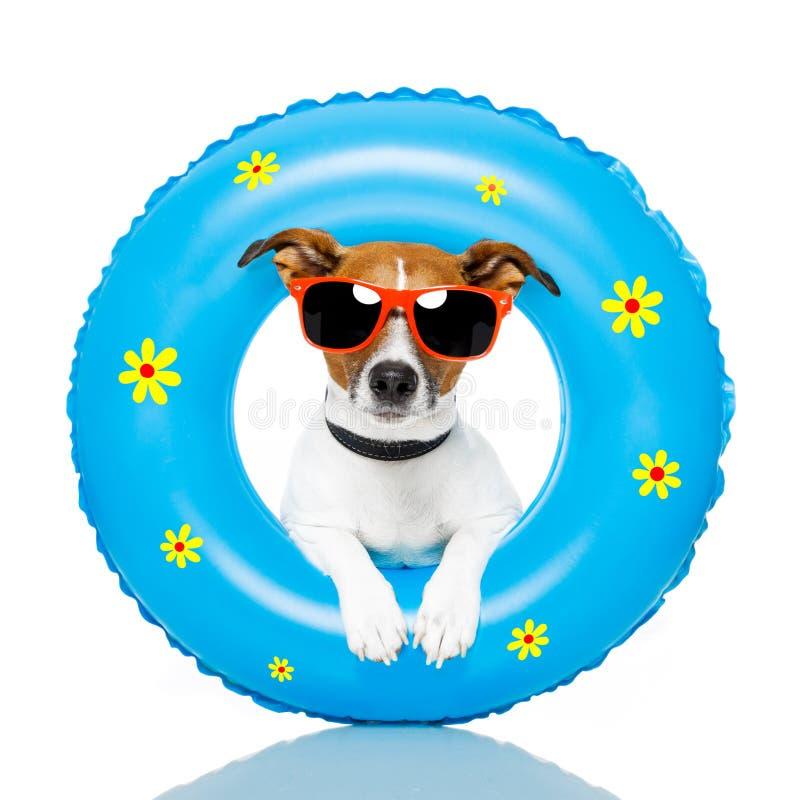 Ein Sonnenbad nehmender Hund stockfotos