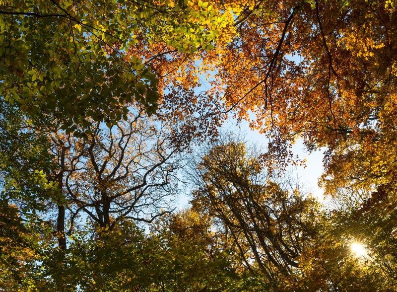 Ein sonnenbeschiener Herbst stockfoto