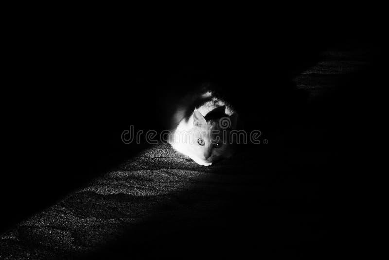 Ein Sonnenstrahl auf einer Katze stockfotografie