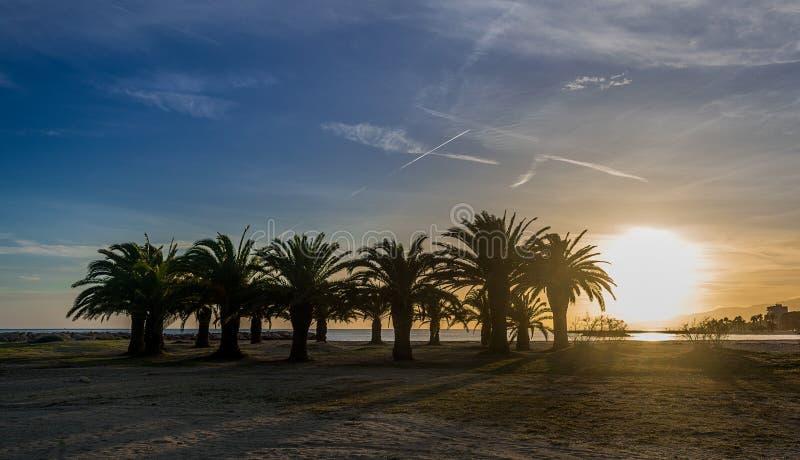 Ein Sonnenuntergang in einem Cambrils-Strand mit einer Gruppe Palmen lizenzfreie stockfotos