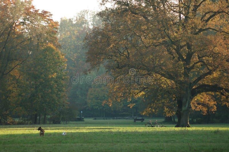 Ein sonniger Herbsttag im Park stockfotos