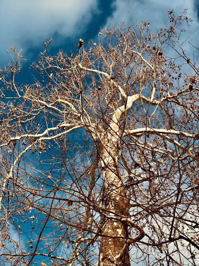 EIN SONNIGER WINTER-'s-TAG - ein weißer Baum vor einem blauen Himmel stockfotos