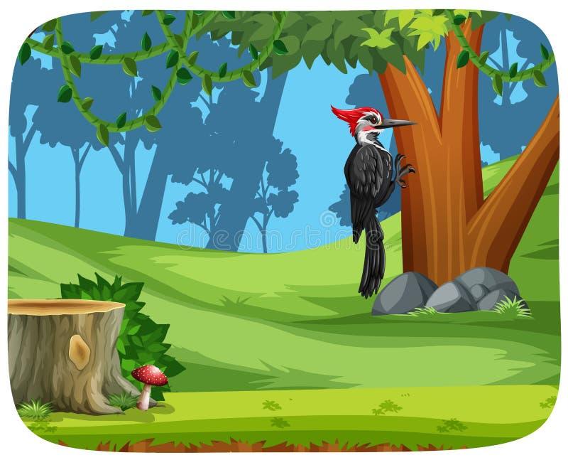 Ein Spechtvogel im Wald vektor abbildung
