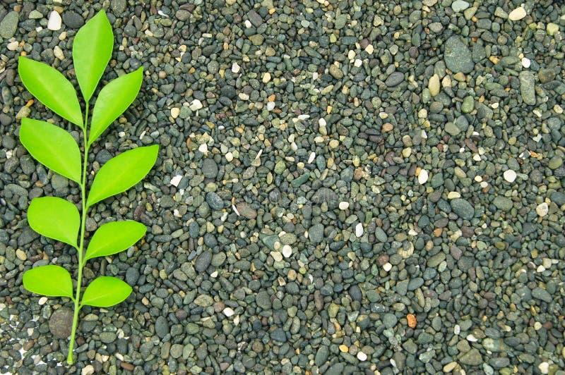 Ein Sprig des Grüns verlässt auf einem Stein stockbilder