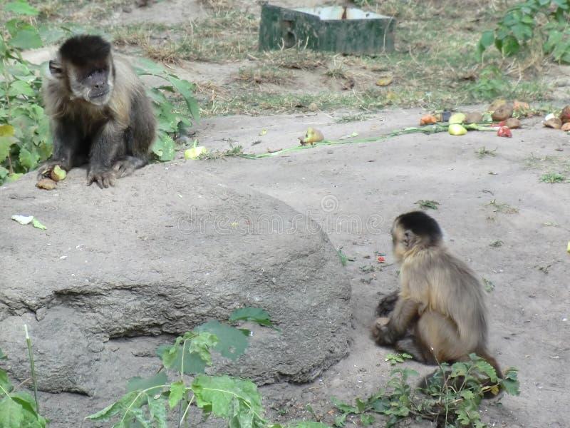 Ein Stück der Tropen im Kiew-Zoo lizenzfreie stockfotografie