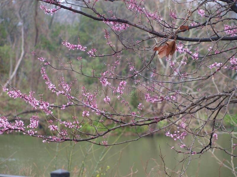 Ein Stück des Falles an übergebend, wie Frühling sich nähert lizenzfreie stockbilder