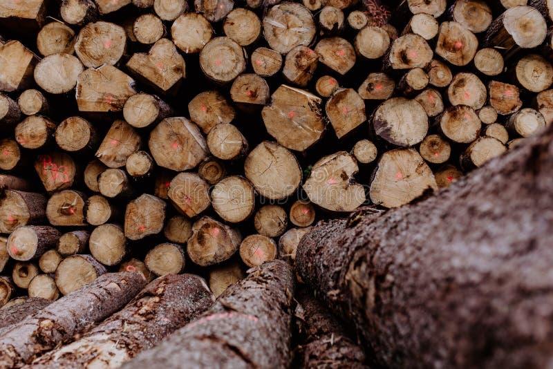 Ein Staplungsstapel des braunen Holzes im Wald stockfotos