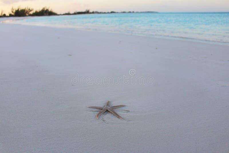 Ein Starfish auf dem Strand in einer Karibikinsel, Bahamas lizenzfreie stockbilder