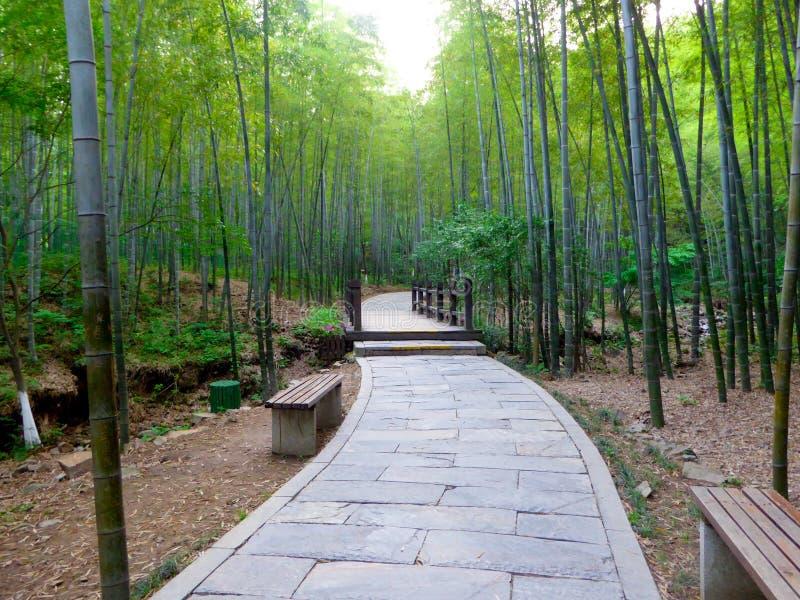 Ein Steinweg durch einen Bambuswald stockfoto