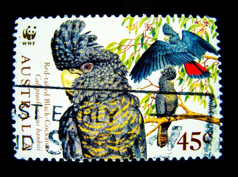 Ein Stempel, der in Australien gedruckt wird, zeigt ein Bild des Rot angebundenen schwarzen Kakaduvogels auf Wert bei Cent 45 stockfotografie