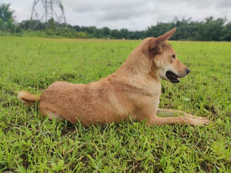 Ein stillstehender Hund lizenzfreie stockfotos