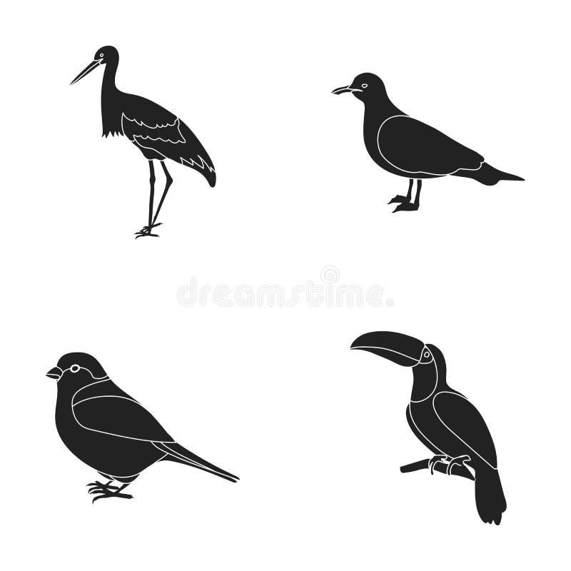 Ein Storch, eine Seemöwe und verschiedene Spezies Vögel stellten Sammlungsikonen im schwarzen Artvektorsymbolvorrat-Illustrations vektor abbildung