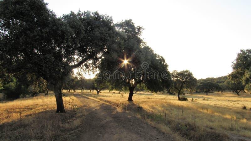 Ein Strahl von Sonnensalingen, cruzando Rayo de sol arboles stockfotografie