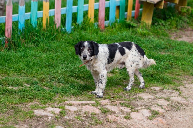 Ein streunender Hund, der mitten in einer Landstraße steht stockbilder