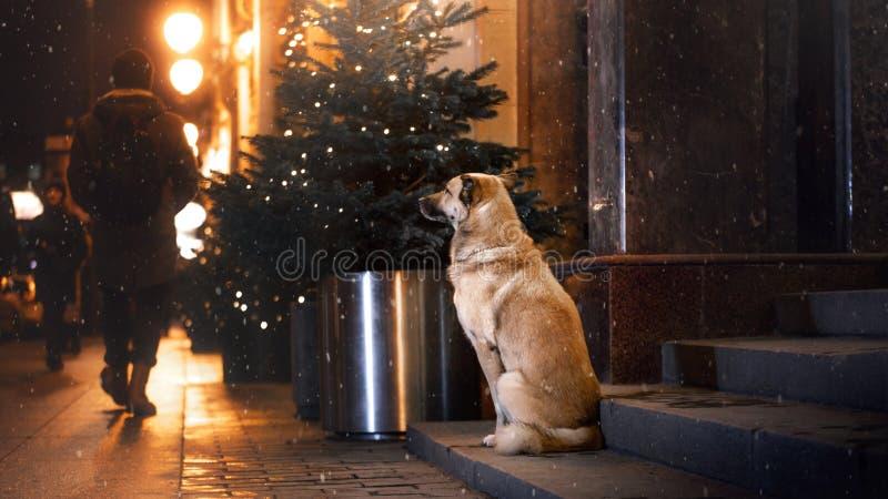 Ein streunender Hund in der Stadt Nacht auf der Straße lizenzfreie stockbilder
