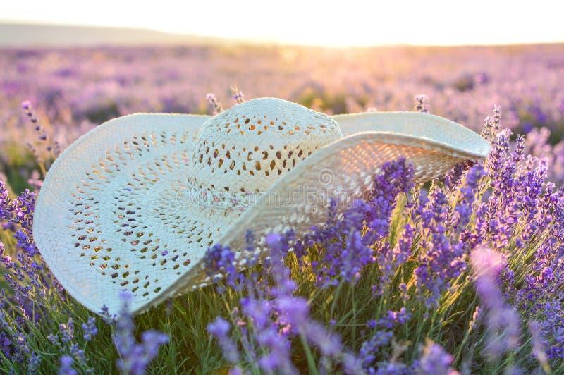 Ein Strohhut liegt auf einem Lavendelgebiet, selektiver Fokus Dämmerung auf dem Lavendelgebiet Das Konzept der Reise, Schönheit S stockfotografie