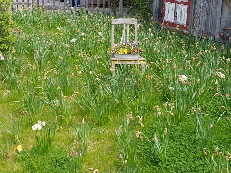 Ein Stuhl mit Blumen und verwelkten Nelken lizenzfreie stockfotografie