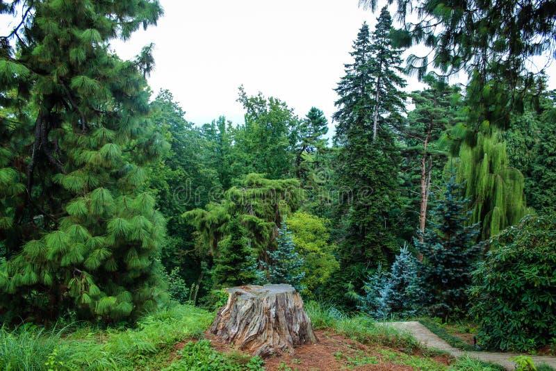 Ein Stumpf von einem gefällten Baum mitten in Bäumen und Grün im Sommerabschluß oben stockbild
