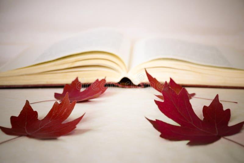 Ein Symbol des Zurückbringens zur Schule - ein offenes Buch, Rotahorn verlässt Unscharfes Bild Bildungskonzept, -wissen und -selb lizenzfreie stockfotos