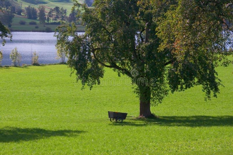 Download Ein Tag im Land stockbild. Bild von dorn, land, spiel, relax - 34141