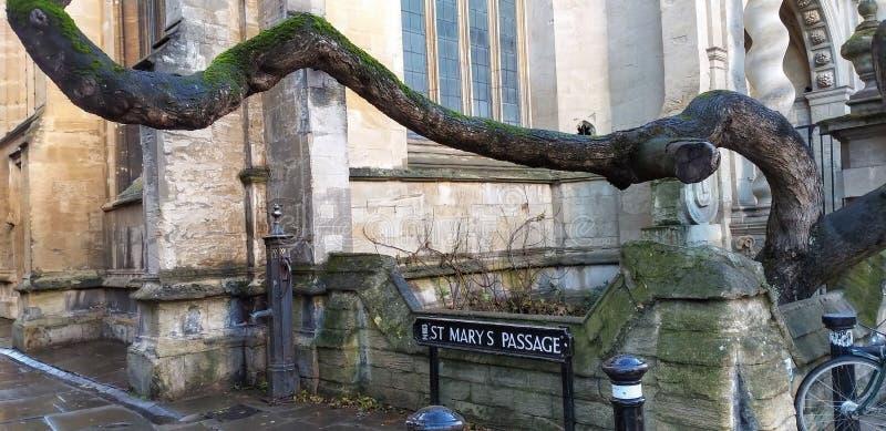 Ein tanzender Baum an StMary-Durchgang stockfotos