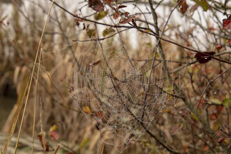 Ein Tau umfaßtes Spinnennetz lizenzfreies stockbild