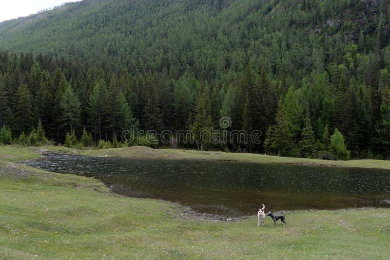 Ein Teich gegraben vom Militär für das Schwimmen auf den Stadtränden des Dorfs von Aktash in der Altai-Republik lizenzfreie stockbilder