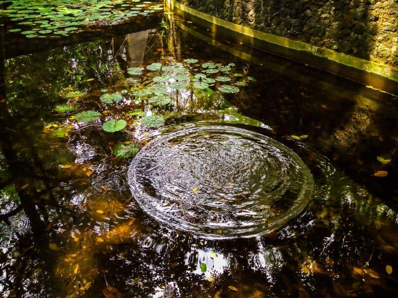 Ein Teich mit durchsichtigem Wasser, Lotusblätter schwimmend und Wasserreifen, die sich ausbreiten lizenzfreies stockbild