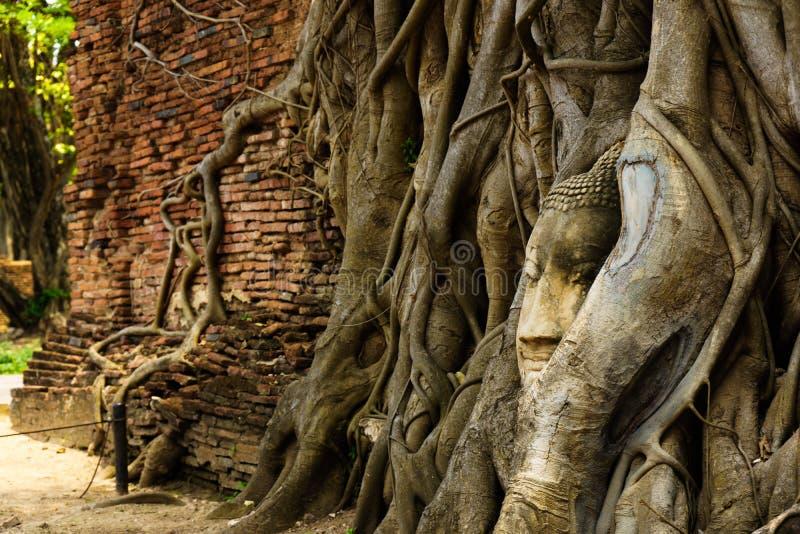 Ein Tempel in Ayutthaya mit dem Kopf des Buddhas lizenzfreie stockbilder