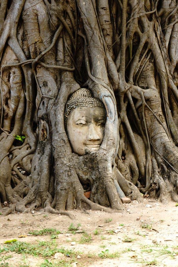 Ein Tempel in Ayutthaya mit dem Kopf des Buddhas versteckt in stockbilder