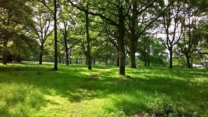 Ein tiefgrüner Wald in Windsor stockbilder
