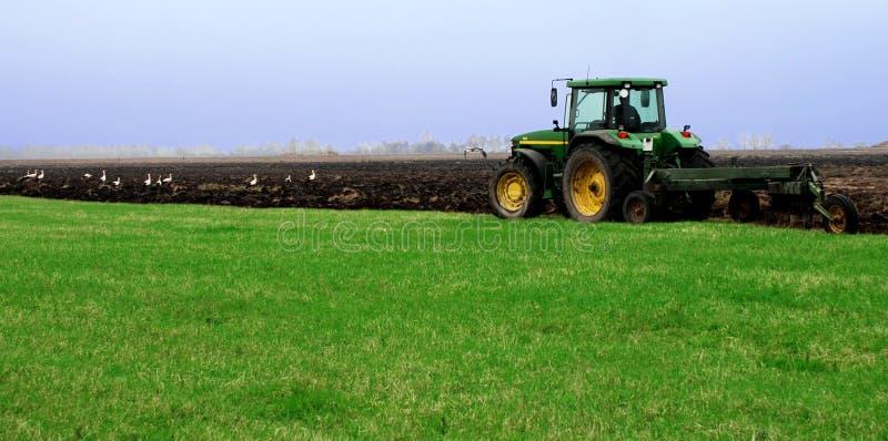 Ein Traktor wird oben durch das Feld mit Störchen gepflogen lizenzfreie stockfotos