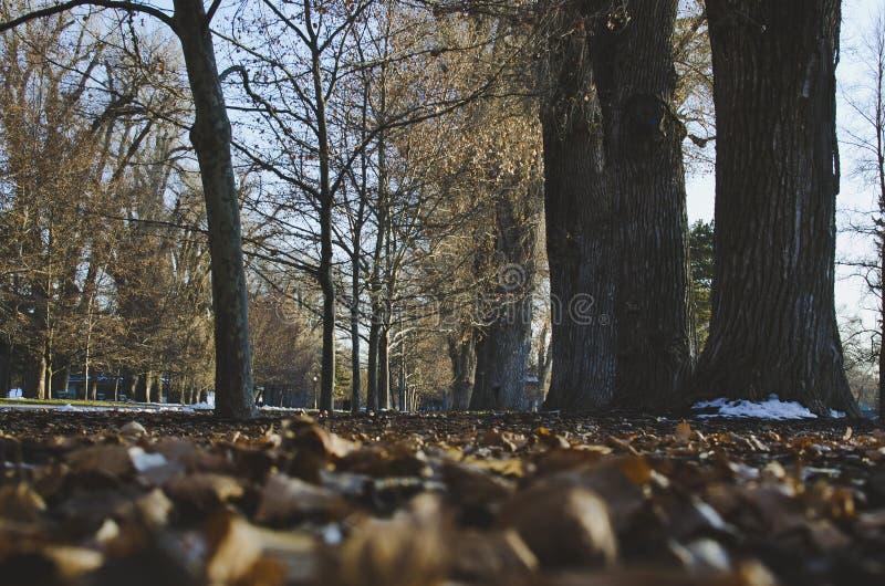 Ein treelined Weg archiviert mit gefallenen Blättern stockfotos