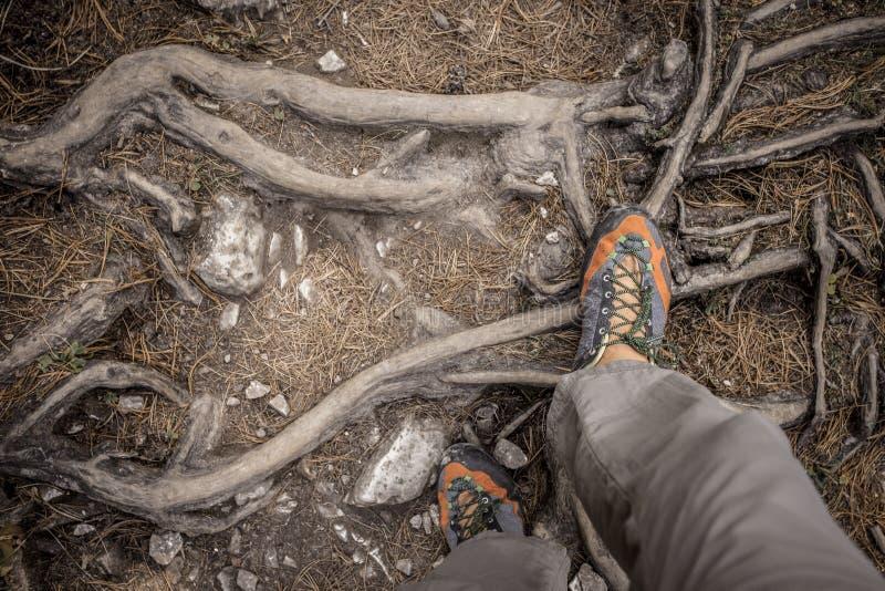 ein Trekker, der lang einen Weg im Wald geht stockbild
