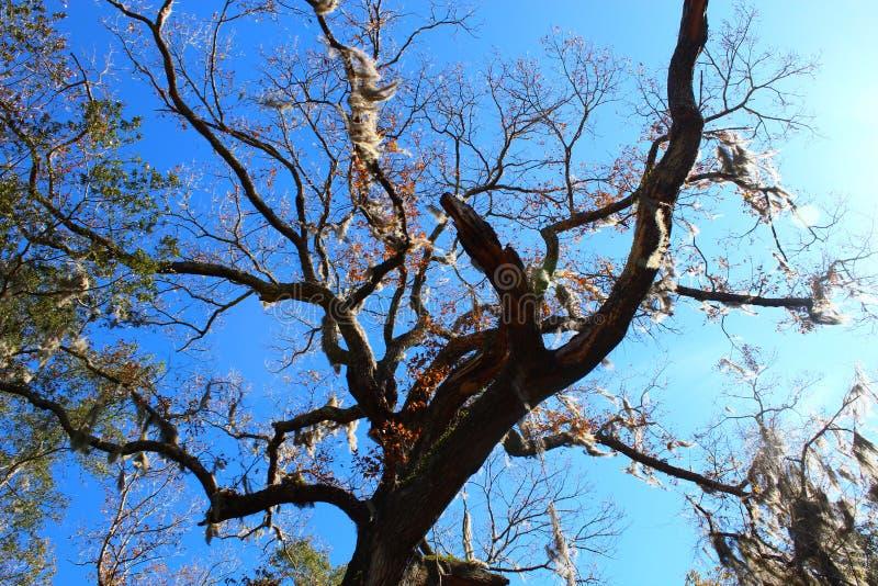 Ein trockener Baum lizenzfreie stockfotos
