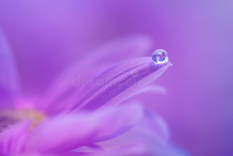 Ein Tropfen des Taus auf dem Blumenblatt einer purpurroten Blume Leichtes Makro mit einer Weichzeichnung lizenzfreies stockbild
