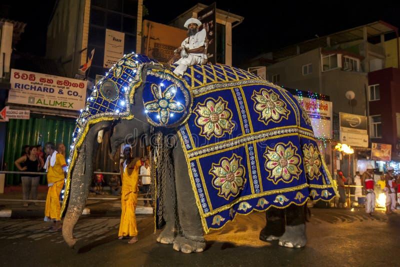 Ein tusker Elefant, der den Spitzenkandidaten während des Esala Perahera in Kandy in Sri Lanka trägt lizenzfreie stockfotografie