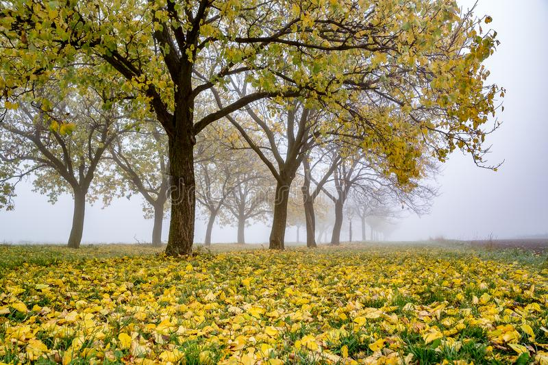 Ein ungewöhnlicher, schöner und mysteriöser nebelhafter Wald stockfoto