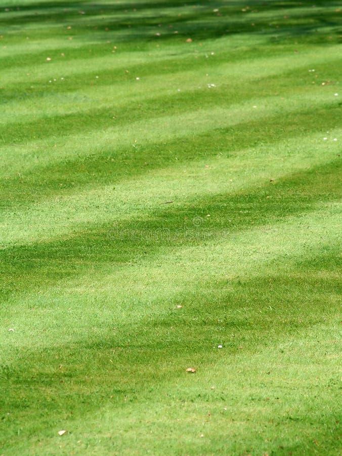 Ein ursprünglicher gestreifter Grasrasen stockbilder