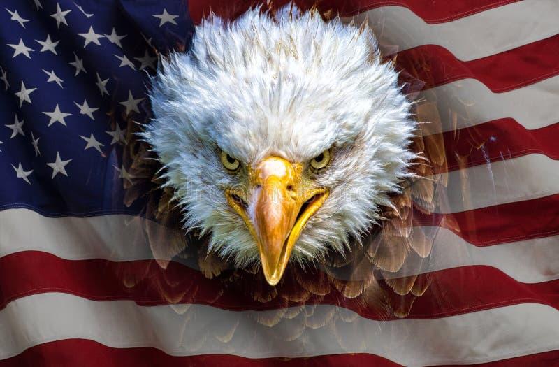 Ein verärgerter nordamerikanischer Weißkopfseeadler auf amerikanischer Flagge stockbilder