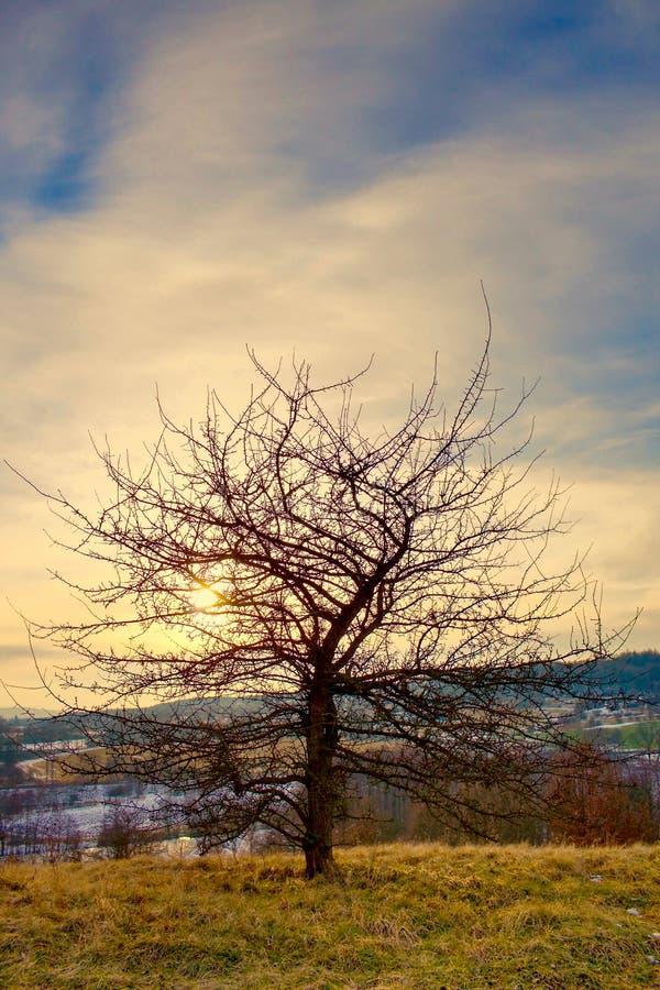 Ein verlassener Baum im Sonnenuntergang stockbild