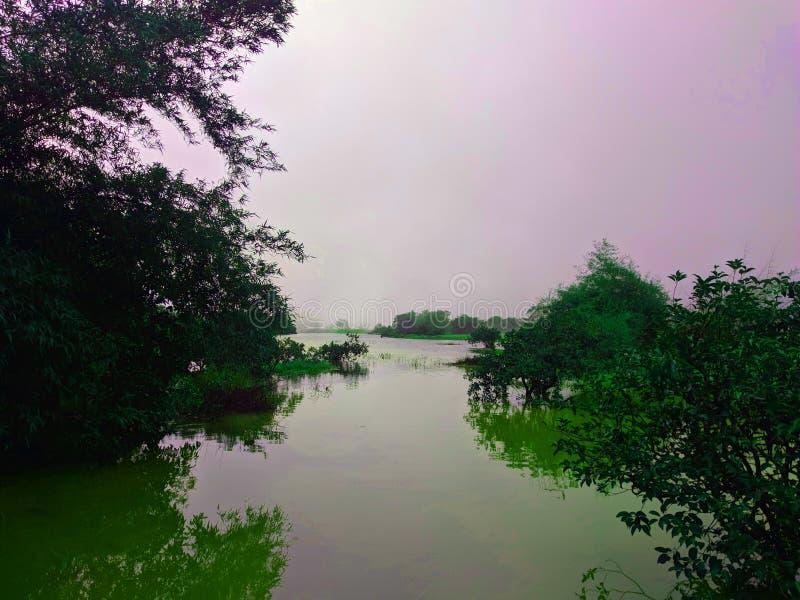 Ein Verschluss der Felder, die wie ein See aussehen lizenzfreie stockbilder