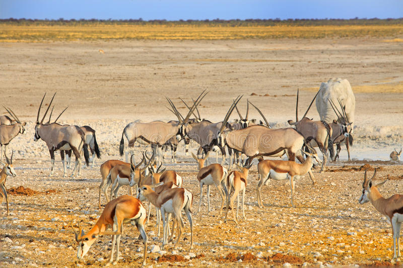 Ein vibrierendes waterhole in Nationalpark Etosha stockfoto