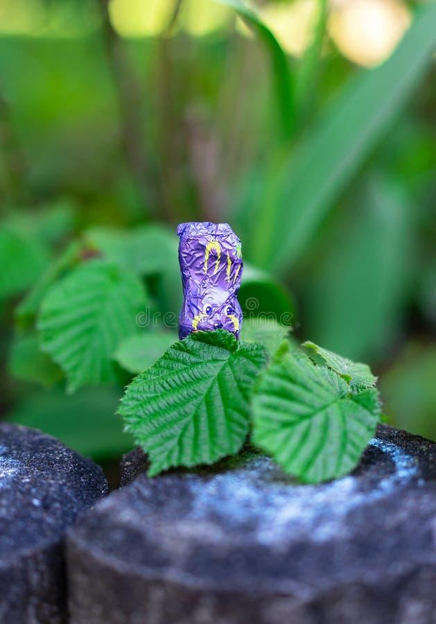 Ein violetter SchokoladenOsterhase, der auf einem konkreten Pfosten sitzt, versteckt sich hinter Blättern stockbilder