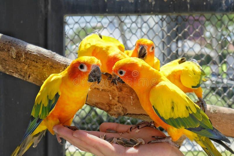 Ein Vogel lizenzfreies stockfoto