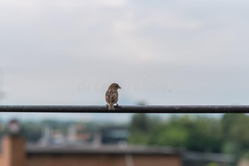 Ein Vogel auf einem Draht stockfotografie