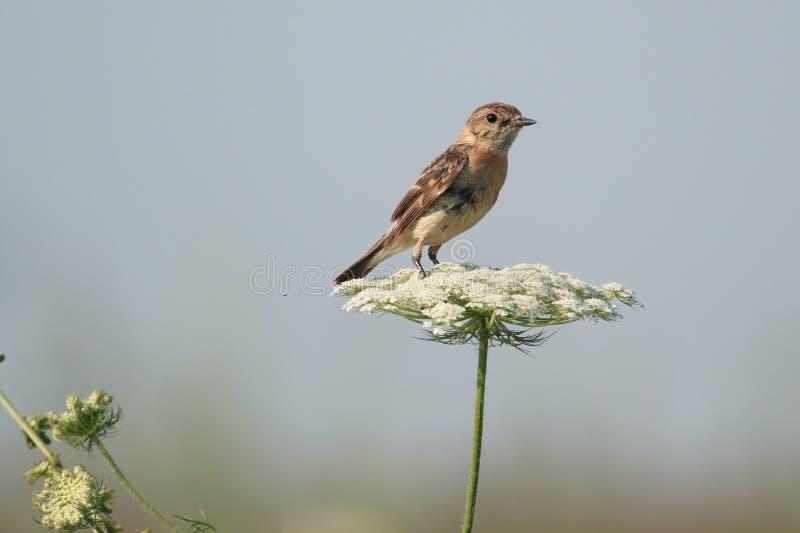 Ein Vogel Auf Einer Blume Stockfotos