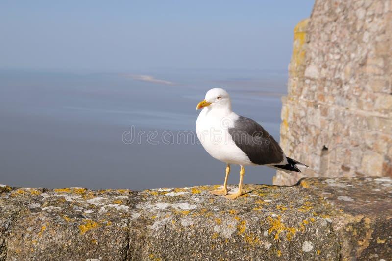 Ein Vogel auf einer Felsenwand lizenzfreies stockbild