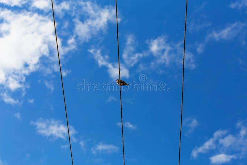 Ein Vogel, der auf dem Draht sitzt stockfotos